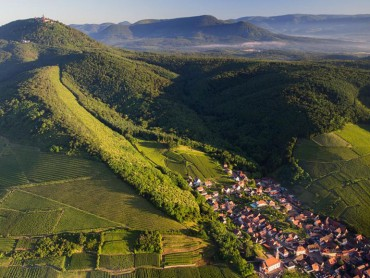 Small Group Tour Alsace Wines