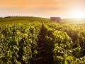 Reims Scenic, Champagne Day tour , 7 Champagne tasting & lunch -Tuesday, Thursday & Saturday
