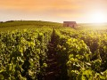 Champagne Day tour, Reims : Heritage & Grandes Maisons de Champagne - Martes, Jueves y Sabado
