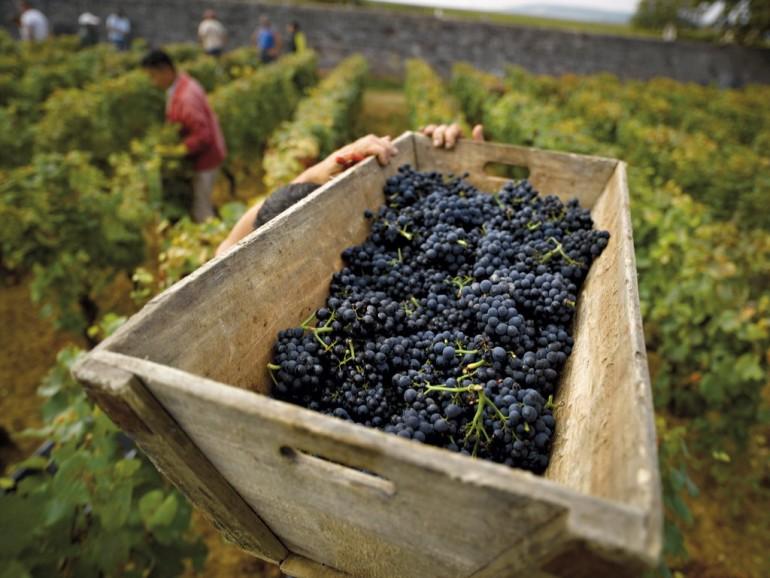 Burgundy Wine Tour - 12 wines tasting - Wednesday & Friday