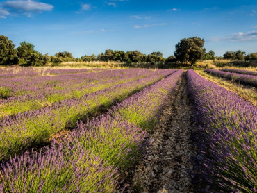Provence Private Tour from Aix, exclusive driver guide, Avignon Popes City, Luberon villages of Gordes & Roussillon