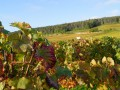 Private Burgundy Day tour - Côte de Nuits - from Monday to Saturday