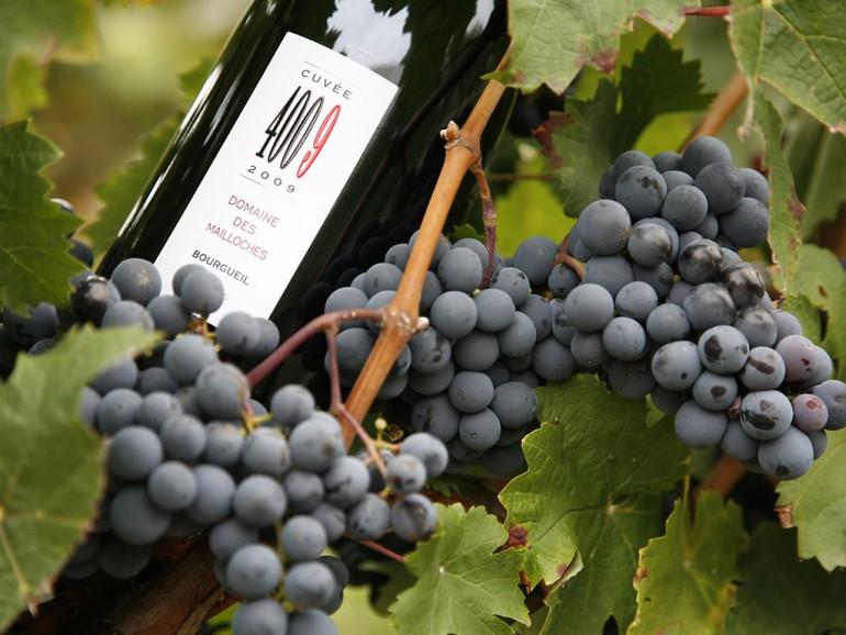 Un día con los vinos del Valle del Loira - Vouvray - Bourgueil – Chinon