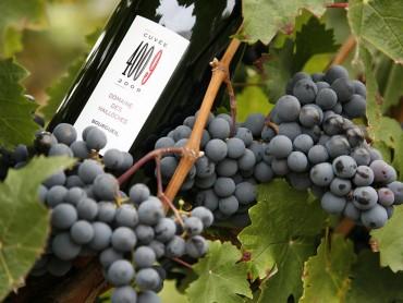 Excursión privada de lujo en el Valle del Loira de un día con 1 noche, Vinos del Valle del Loira