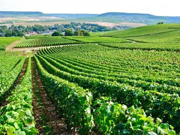 Um dia de borbulhas, Reims & Epernay, 2 degustações de Champanhe, Moet & Chandon / Taittinger, de Segunda-feira a Sábado