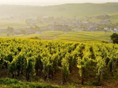 BURGUNDY PRIVATE TOURS