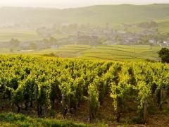 Circuitos privados em Borgonha