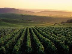 Tours privados de vinos de Francia