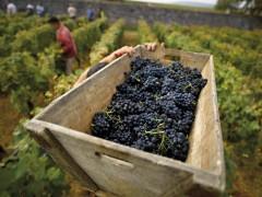 Tour de vinos del Borgoña - 1 día
