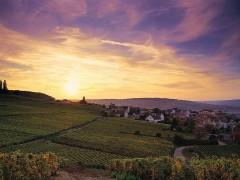 Excursiones Diarias en Champagne