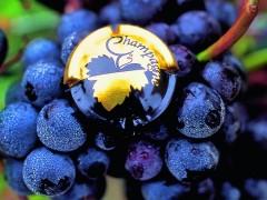 Tours Privados de vinhos em França