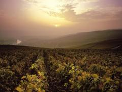 Roteiros de vinhos privados em Champagne - 1 dia
