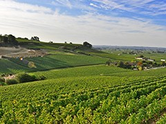 PRIVATE BORDEAUX WINE TOURS - 1 DAY
